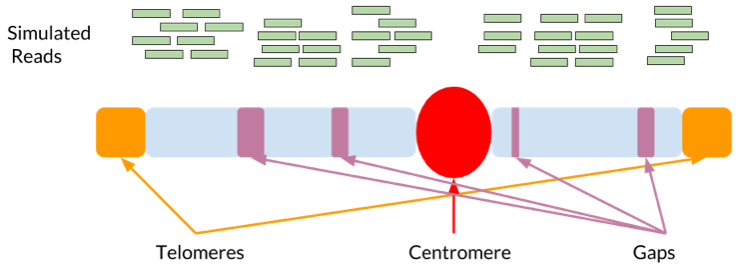 Reference Genome